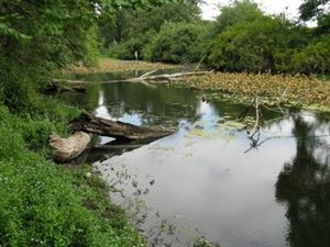 Wendover Park