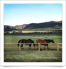 Beddin' Down Bed Breakfast & Horse Hotel