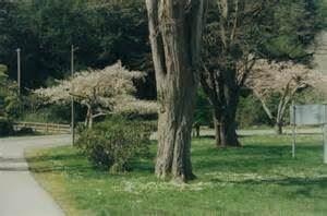 Rohner Park