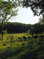 Oklahoma Winery & Vineyard