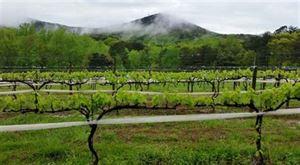 Sharp Mountain Vineyard