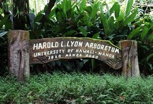 Harold L Lyon Arboretum