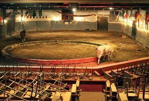 Noble Horse Theatre