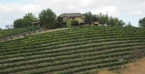 Almond Hill Vineyard