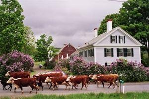 The Inn At Valley Farms