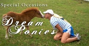 Special Occasion dream ponies