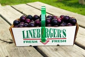 Lineberger's Maple Springs Farm