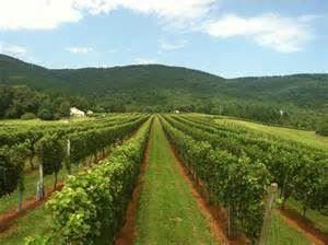 Afton Mountain Vineyards