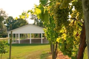 Brookmere Farm Vineyards