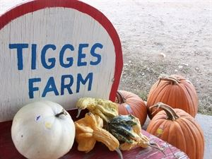 Tigges Farm Produce and Pumpkin Patch