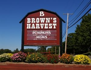 Brown's Harvest