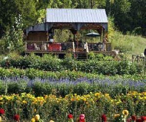 Madison Creek Farms