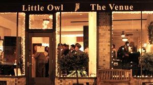 Little Owl the Venue