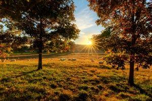 Sweet Seasons Farm