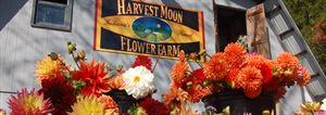 Harvest Moon Flower Farm