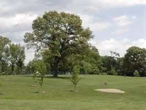 The Golf Course At River View