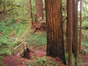 The Forest of Nisene Marks State Park