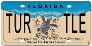 Anna Maria Island Turtle Watch