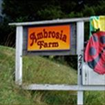 Ambrosia Farm Bed & Breakfast